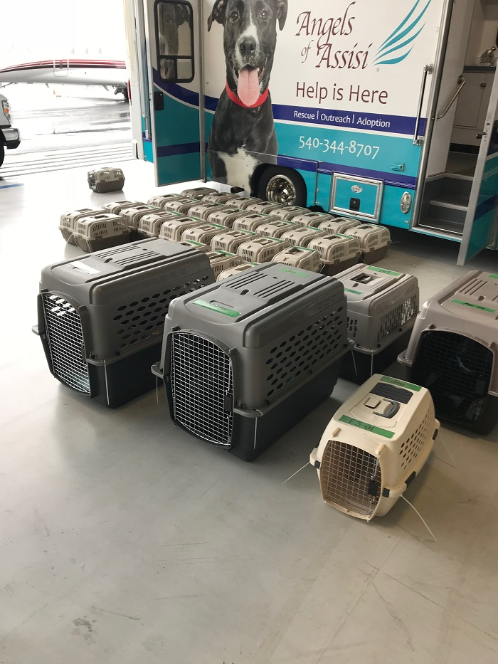 Rescue animals arrive in crates at a small airport.