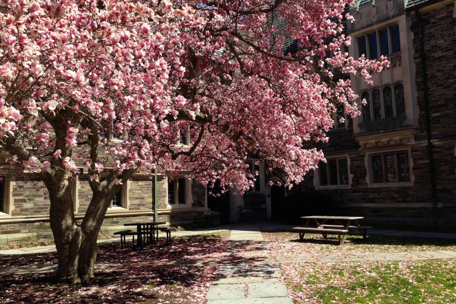This is a photo of Princeton during the spring.