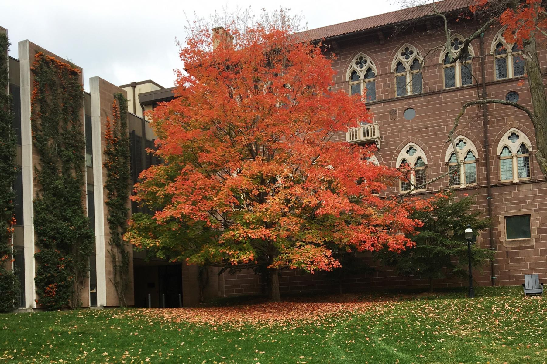 Princeton campus during the fall